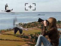 kraanvogels fotograferen