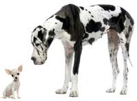 kleine hond