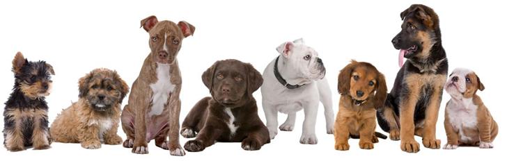 hondenvoedinghorta