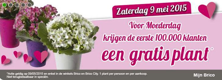 bricogratisplant