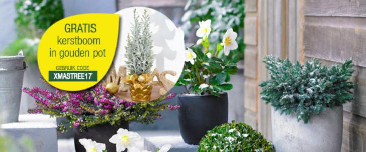 gratis kerstboom in gouden pot bakker