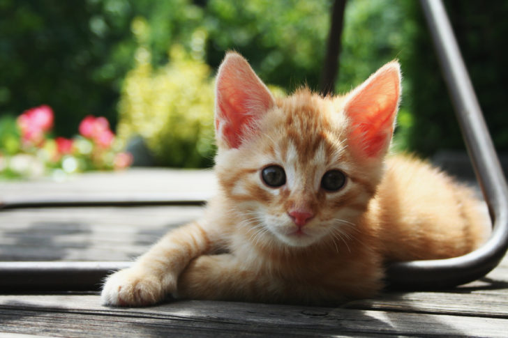 Prins kitten