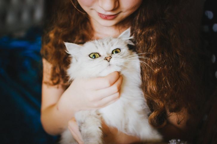 gratis kittens