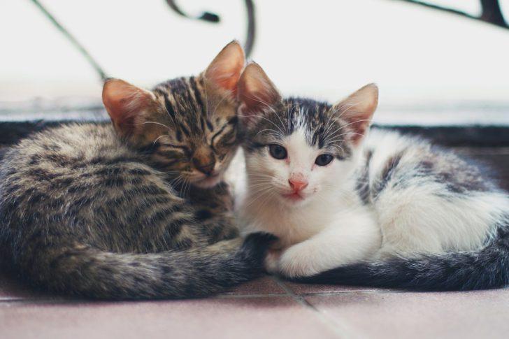 Kittens voeding