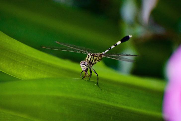 mosquitron korting