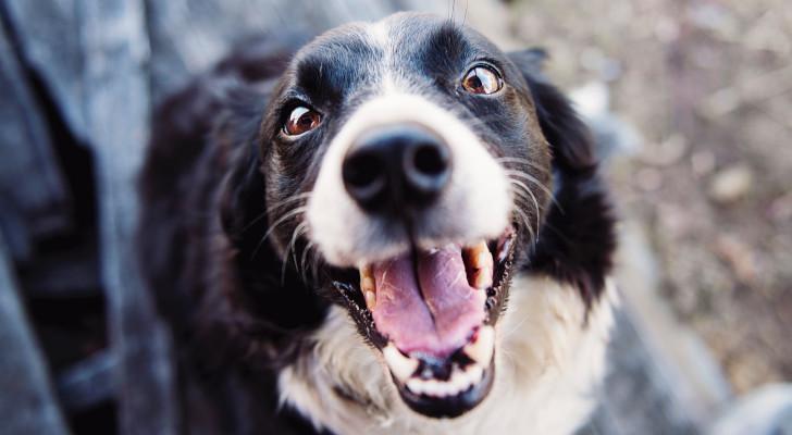 hondenvoeding terugbetaald