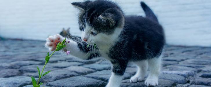 gratis kittenpakket whiskas